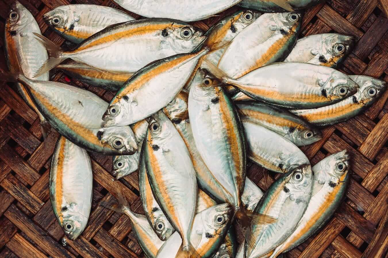 Fresh fish: Hoi An specialities